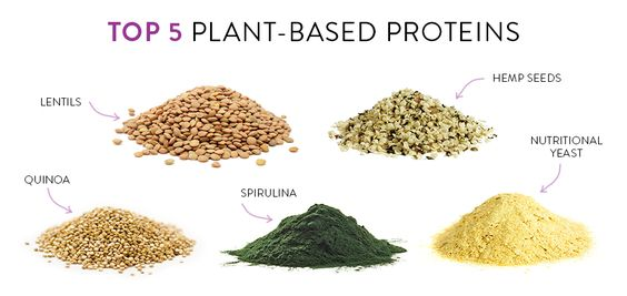 What are the best Plant-Based Proteins?