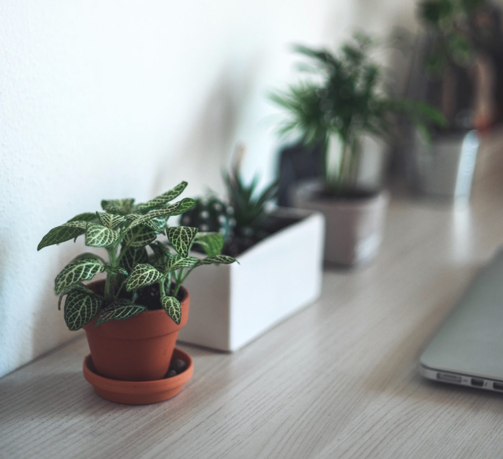 indoor plants better home